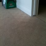 professional carpet cleaners Auckland